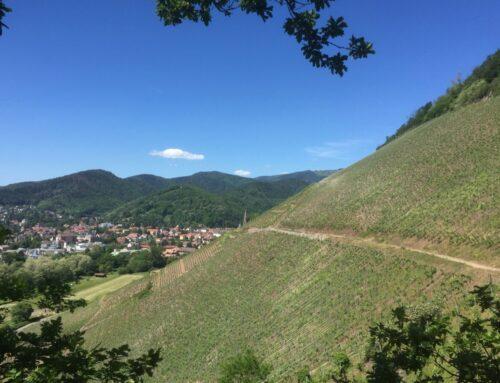 Biken im Elsass mit Lotti und Franz